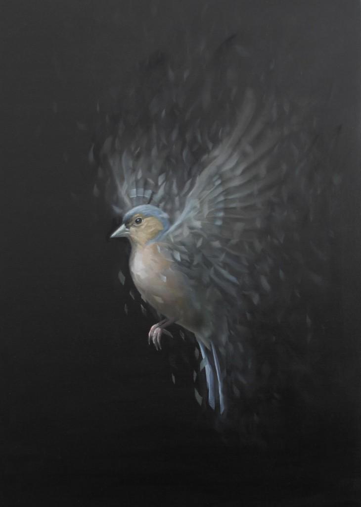 David Monllor - birdstudy 06
